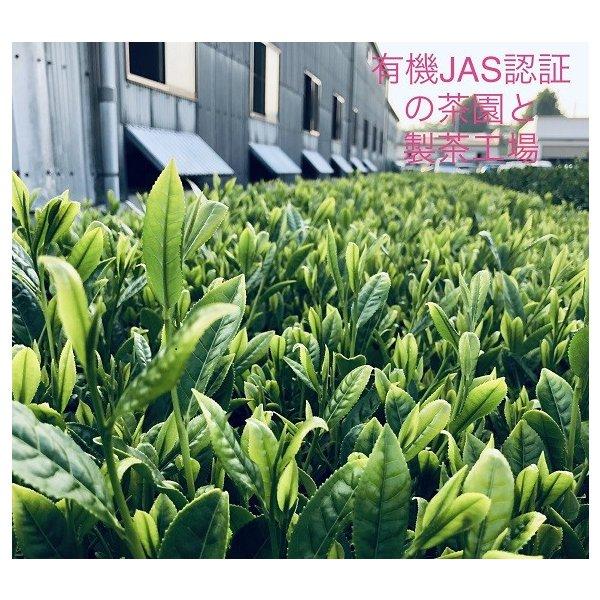 ooishi-seicha-en_yume-1200_4